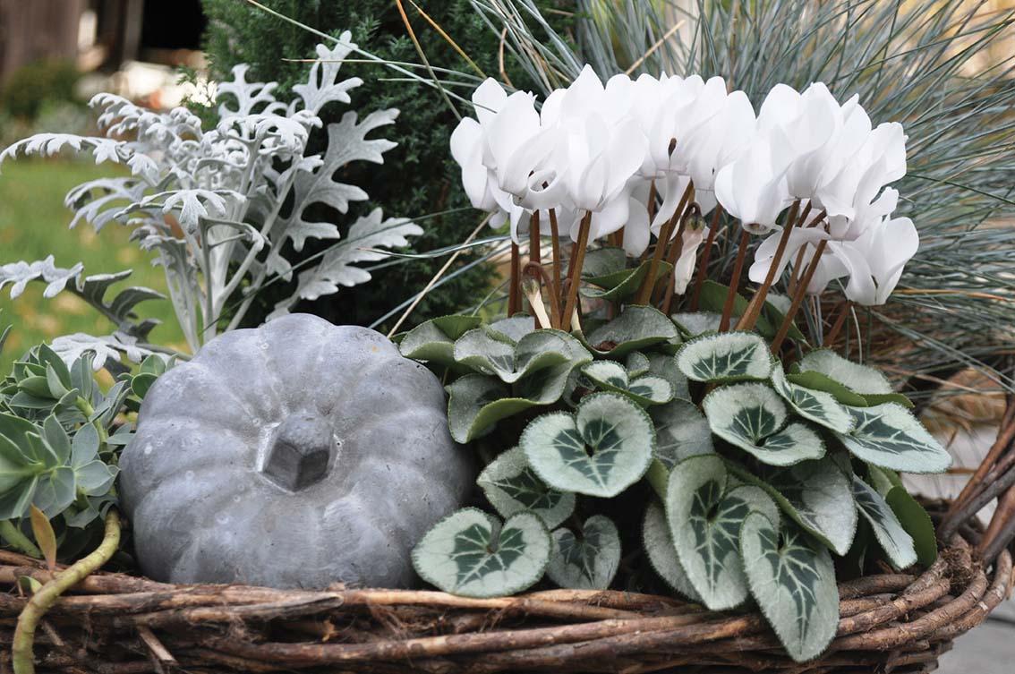 Plantes et fleurs pour jardinières d'hiver